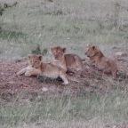 Week 38 – Nairobi and the Masai Mara