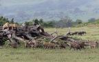 Week 42 – Ngorongoro Crater and Zanzibar Island