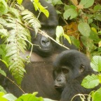 Week 40 – Queen Elizabeth and Trekking to the Mountain Gorillas